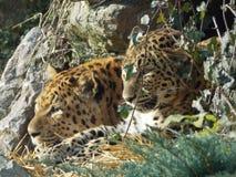 Animal sauvage Photos libres de droits