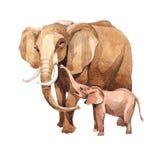 Animal sauvage d'éléphant exotique dans un style d'aquarelle d'isolement Illustration Libre de Droits