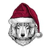 Animal sauvage d'illustration de Wolf Dog Christmas portant nouveau heureux d'hiver de chapeau du père noël de Noël de chapeau de Photographie stock libre de droits