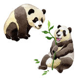 Animal sauvage de panda dans un style d'aquarelle d'isolement Image stock