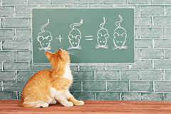 Animal school. Education idea about foxy Cat studied mathematics on example of addition of mice Royalty Free Stock Photos