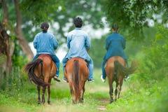 Animal Science studying on horseback. Thai Horse. Horse whispere stock photo