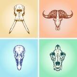 Animal Scull Set Elephant Buffalo Ostrich Lion Royalty Free Stock Photography