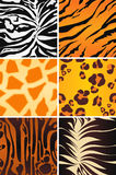 Animal seamless patterns. A set of six textures Royalty Free Stock Image