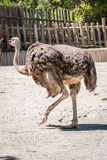 Animal selvagem Imagem de Stock