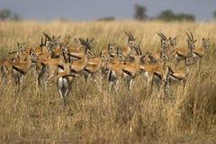 Animal selvagem em África, parque nacional do serengeti imagem de stock