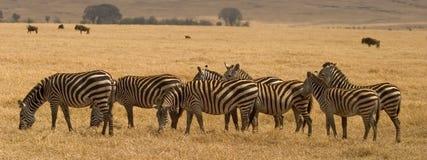 Animal selvagem em África, parque nacional do serengeti Foto de Stock Royalty Free