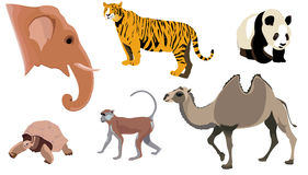 Animal set. Collection of animals. Vector image stock illustration