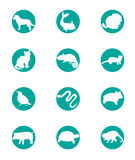 Animal set icon Stock Photography