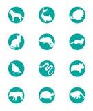 Animal set icon Stock Photography