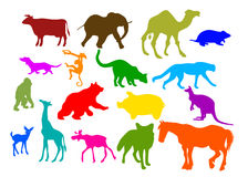 Animal set. An illustration is set of colorful animals Stock Images