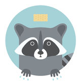 Animal set. Portrait in flat graphics - Raccoon Royalty Free Stock Photos