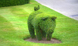 Animal shaped bush Hever Castle royalty free stock images