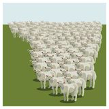 Animal sheep herd queuing. Keeping together, vector Stock Image