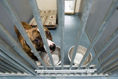 Animal shelter Stock Image