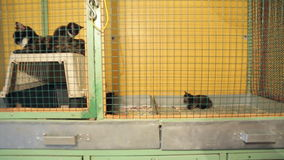 Animal shelter, animals in cages at the animal shelter stock video