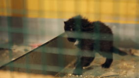 Animal shelter, black kitten in a cage stock video footage