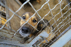 Animal shelter.Boarding home for dogs. Abandoned dog in the kennel,homeless dog behind bars in an animal shelter.Sad looking dog behind the fence looking out Stock Photography