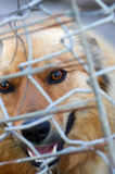 Animal shelter.Boarding home for dogs. Abandoned dog in the kennel,homeless dog behind bars in an animal shelter.Sad looking dog behind the fence looking out Stock Image