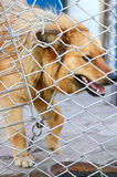 Animal shelter.Boarding home for dogs. Abandoned dog in the kennel,homeless dog behind bars in an animal shelter.Sad looking dog behind the fence looking out Royalty Free Stock Photos