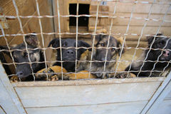 Animal shelter.Boarding home for dogs Stock Images