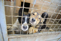 Animal shelter.Boarding home for dogs. Abandoned dogs in the kennel,homeless dogs behind bars in an animal shelter.Sad looking dog behind the fence looking out Stock Image