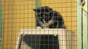 Animal shelter, cat in a cage stock video