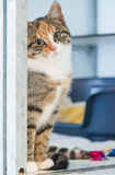Animal shelter cat Stock Images