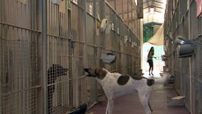 Animal shelter stock video