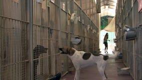Animal shelter stock video