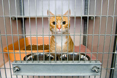 Animal shelter. Homeless cat in a cage in an animal shelter royalty free stock photos