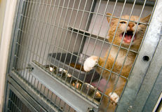 Animal shelter. Homeless cat in a cage in an animal shelter Stock Photos