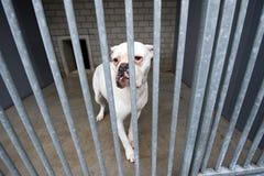 Animal shelter Stock Image