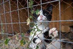 Animal Shelter Orphaned Pet Stock Photo