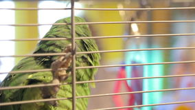 Animal shelter, parrot in a cage stock video footage