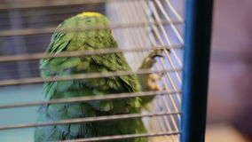 Animal shelter, parrot lives in a cage stock video footage