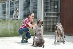 Animal shelter volunteer feeding dogs. Animal shelter volunteer feeding the dogs Royalty Free Stock Photo