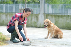 Animal shelter volunteer feeding dogs. Animal shelter volunteer feeding the dogs Stock Photography