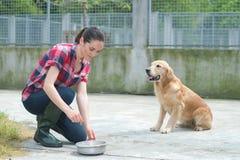 Animal shelter volunteer feeding dogs Stock Photo