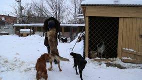 Animal shelter, volunteer hugging dogs stock video