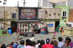 Animal Show at Universal Studios Hollywood. Los Angeles, California, USA - March 12, 2015: The trainer and trained dog are performing in Animal Show at Universal Stock Photo