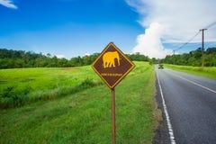 Animal, ?sia, elefante, elefante indiano, mam?fero foto de stock royalty free