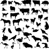 Animal silhouette contour Royalty Free Stock Image