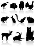 Animal silhouettes. The set from black animal silhouettes with shadow Stock Image