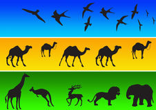 Animal Silhouettes In Color Royalty Free Stock Photography