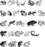 Animal Silouettes royalty free illustration