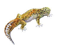 Animal simple de gecko d'aquarelle d'isolement illustration stock