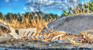 Animal skeleton in the countryside Royalty Free Stock Photography