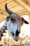 Animal Skeleton Natural history Museum Paris Royalty Free Stock Images