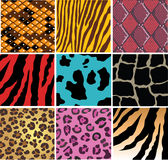 Animal skin. Illustration of skin of different animals and snakes Royalty Free Stock Images